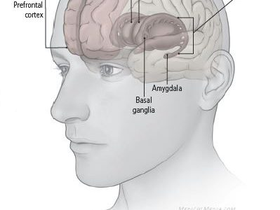 Areas of the brain that plays a role in depression